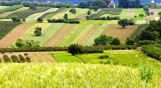 Extensive Landwirtschaft mit Hecken und Obstgehölzen
